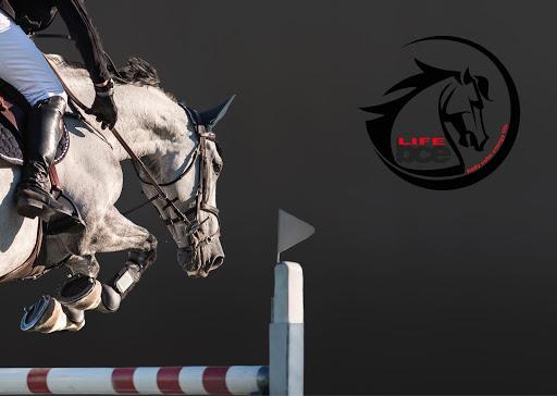 Kriokomora dla koni