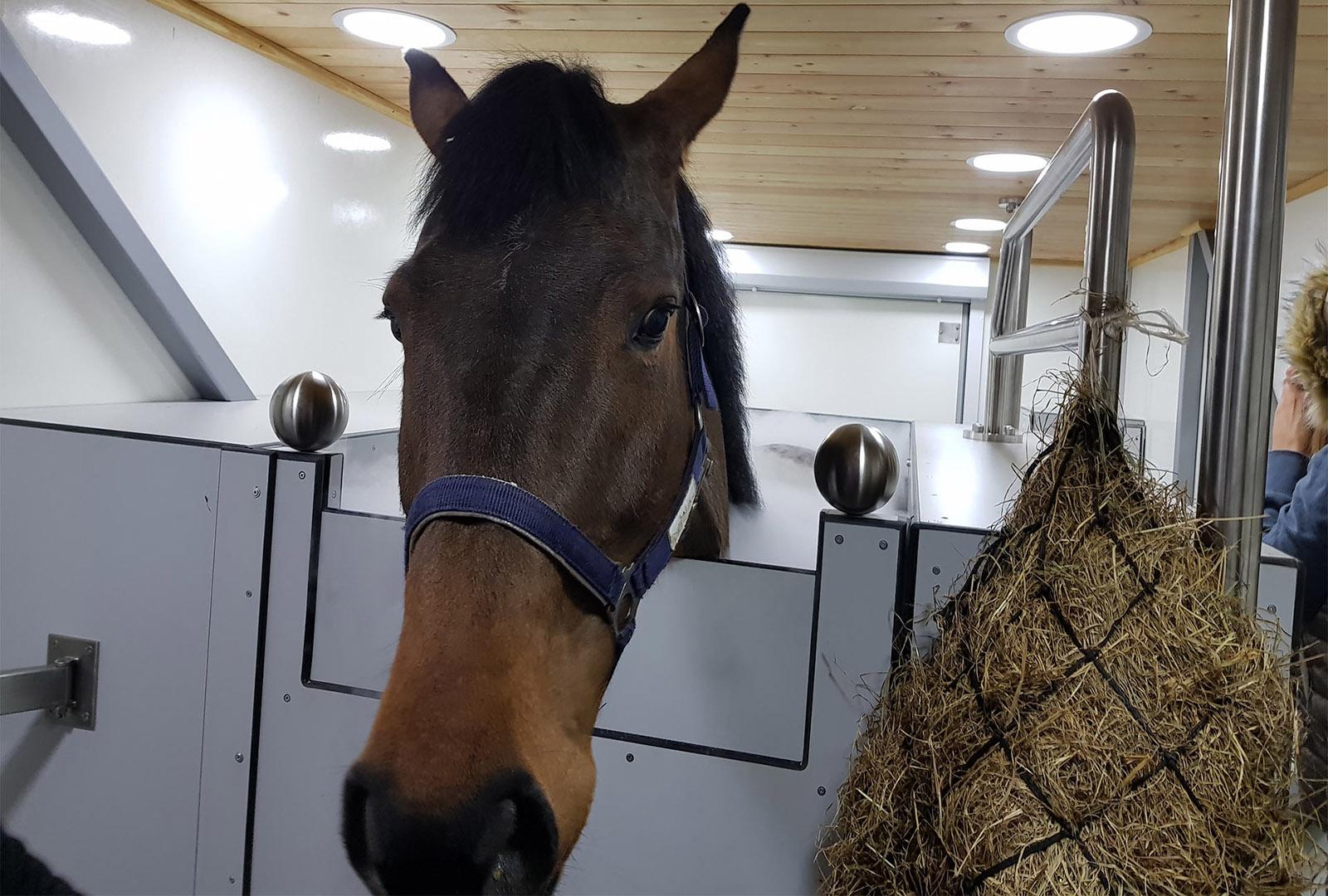 Cryochamber for horses